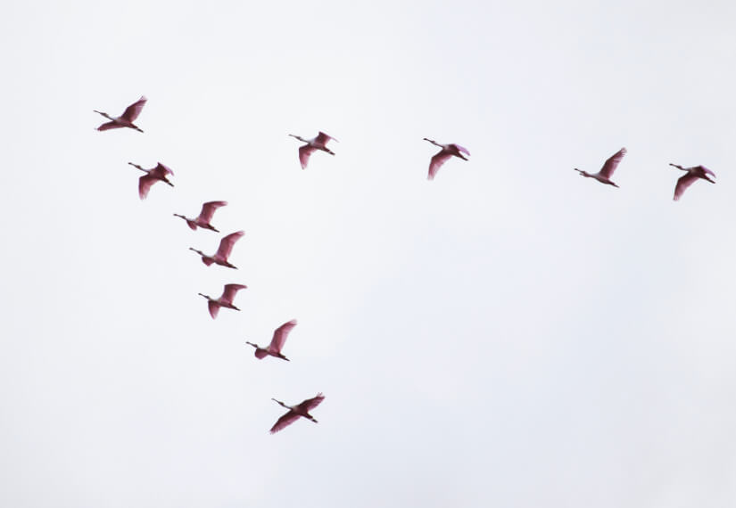 A flock of birds in flight
